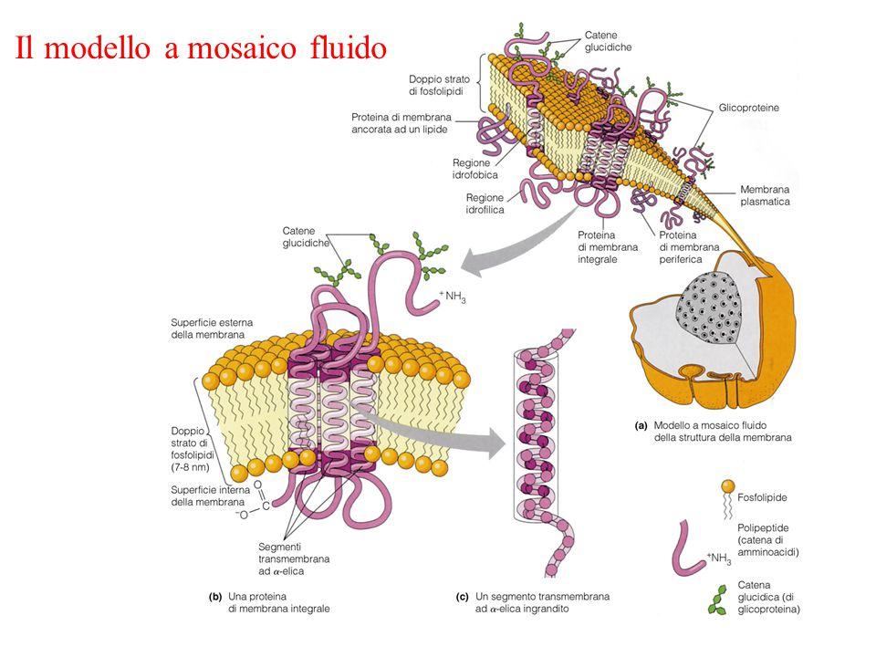 Il modello a mosaico fluido