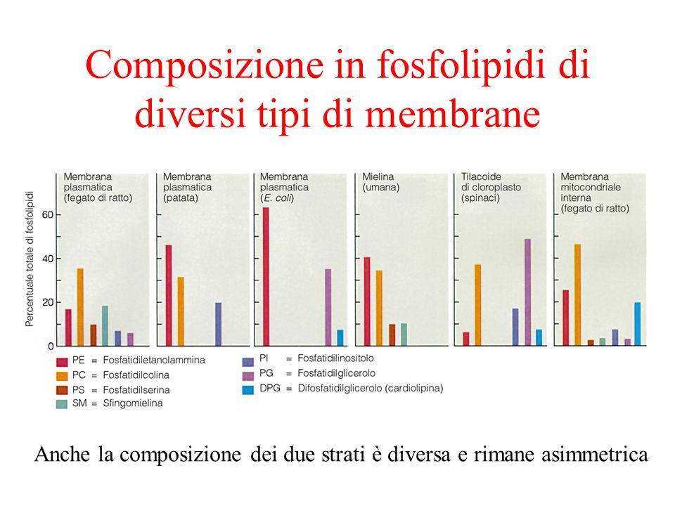 Composizione in fosfolipidi di diversi tipi di membrane