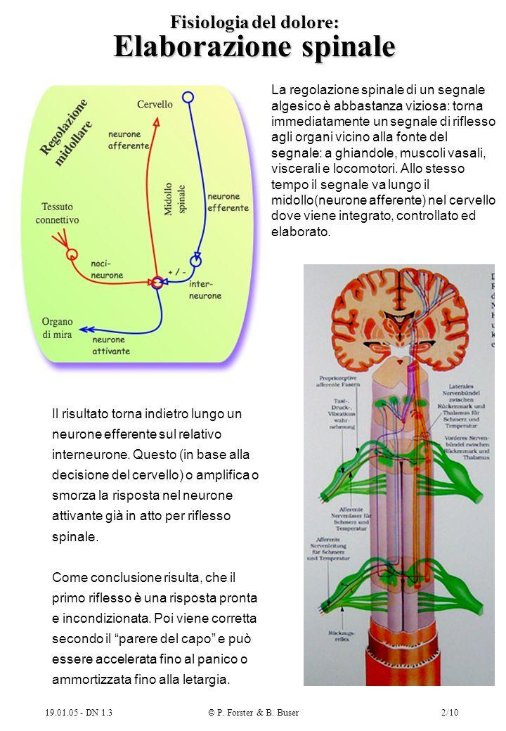 Fisiologia del dolore: Elaborazione spinale