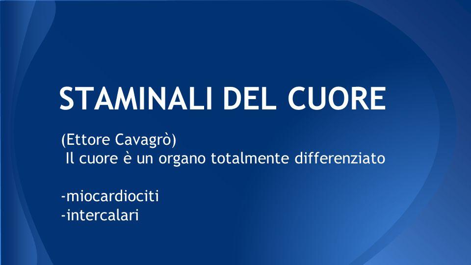 STAMINALI DEL CUORE (Ettore Cavagrò)