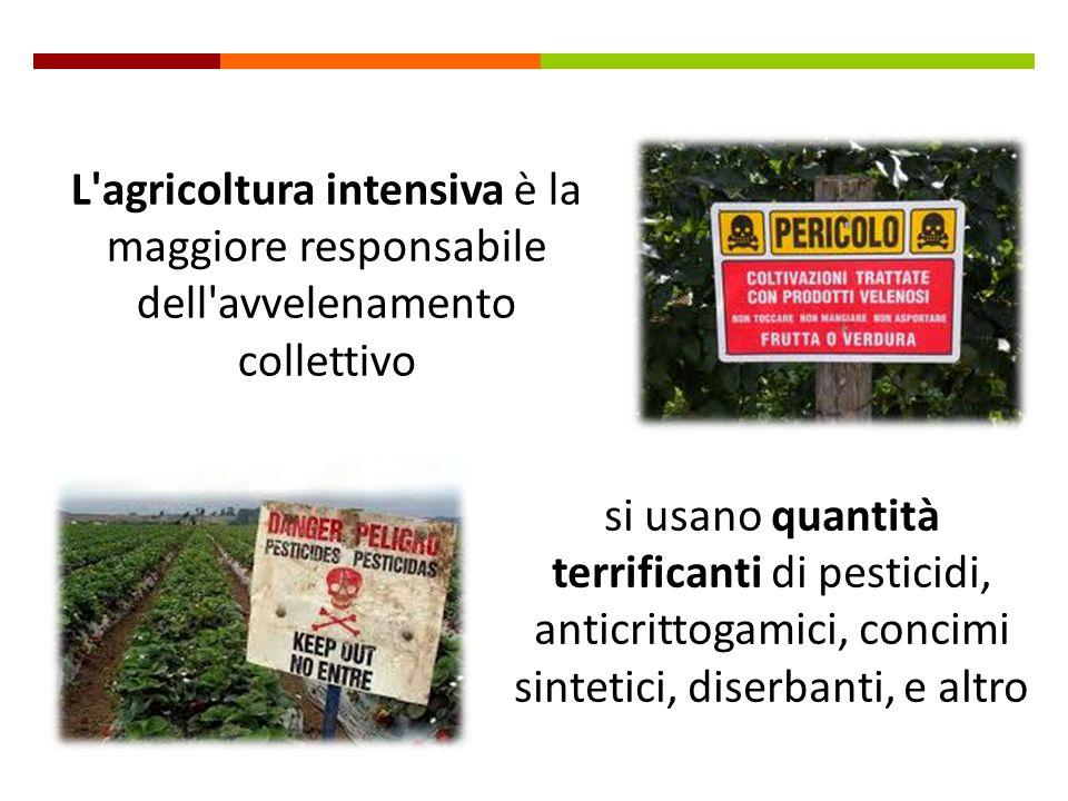 L agricoltura intensiva è la maggiore responsabile dell avvelenamento collettivo