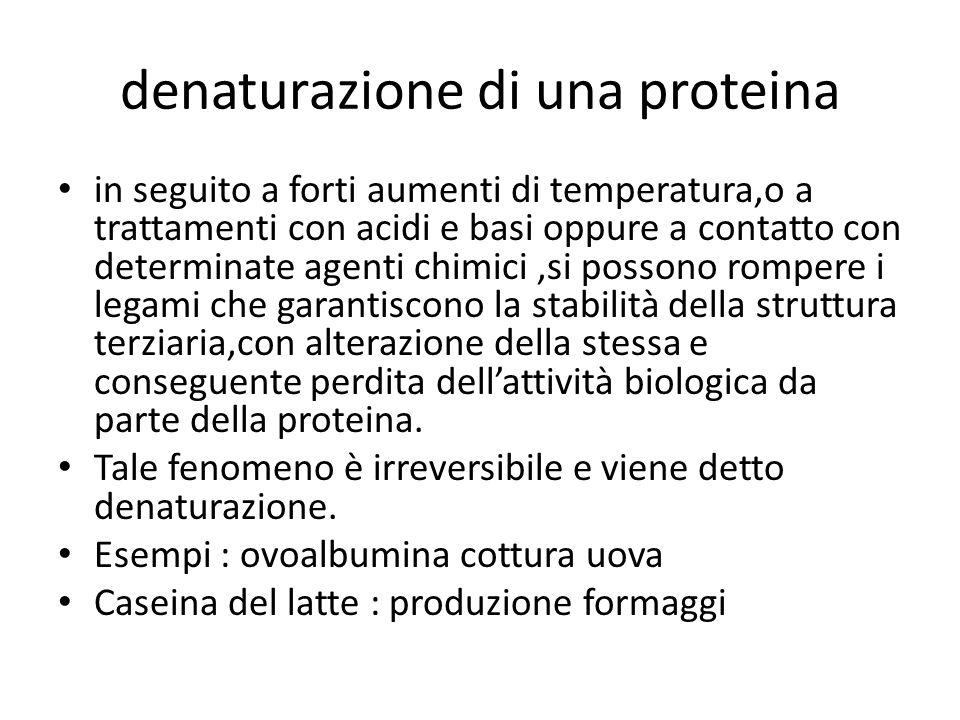 denaturazione di una proteina