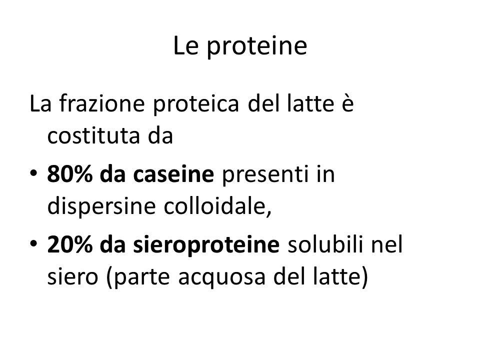 Le proteine La frazione proteica del latte è costituta da
