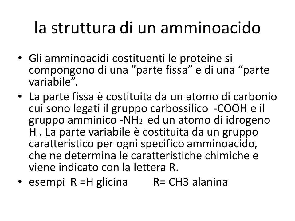 la struttura di un amminoacido