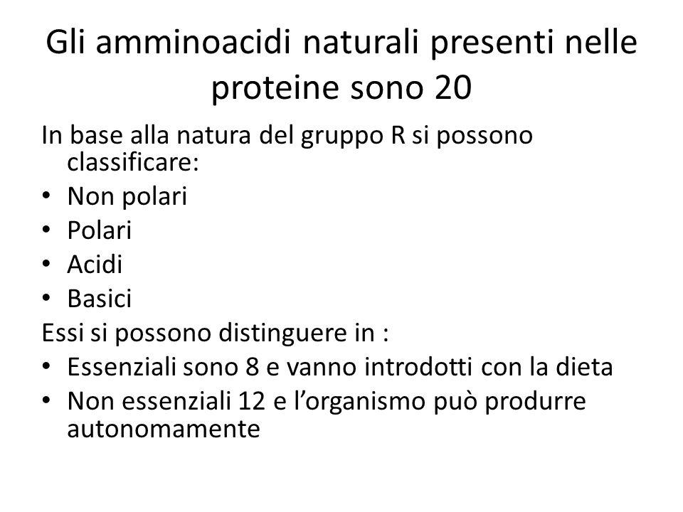Gli amminoacidi naturali presenti nelle proteine sono 20