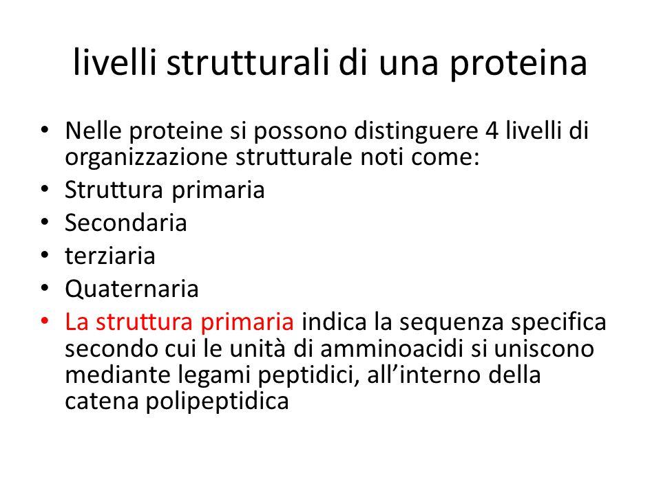 livelli strutturali di una proteina