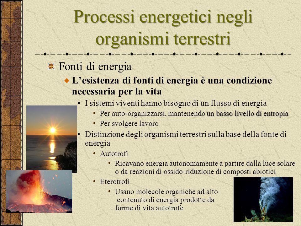 Processi energetici negli organismi terrestri
