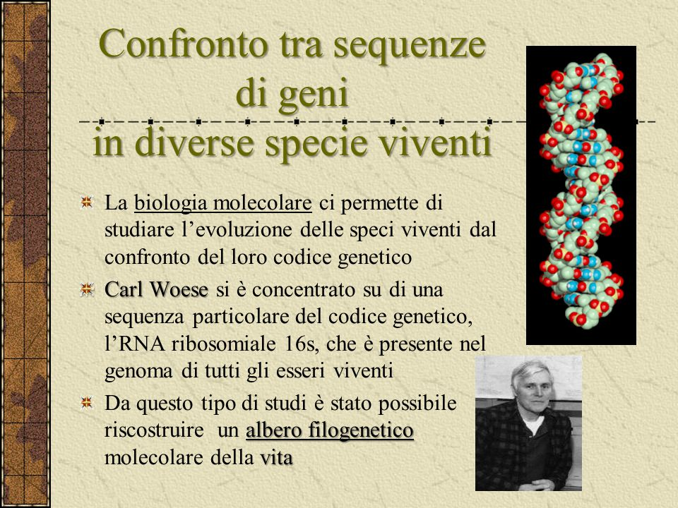 Confronto tra sequenze di geni in diverse specie viventi
