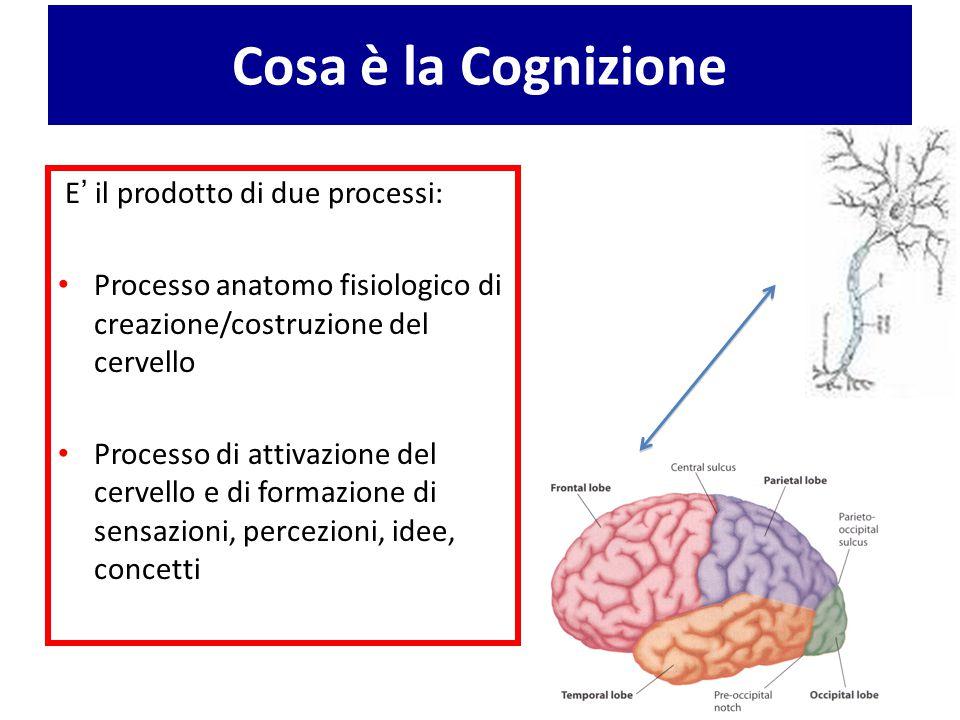 Cosa è la Cognizione E' il prodotto di due processi: