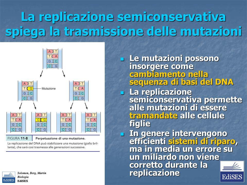 La replicazione semiconservativa spiega la trasmissione delle mutazioni