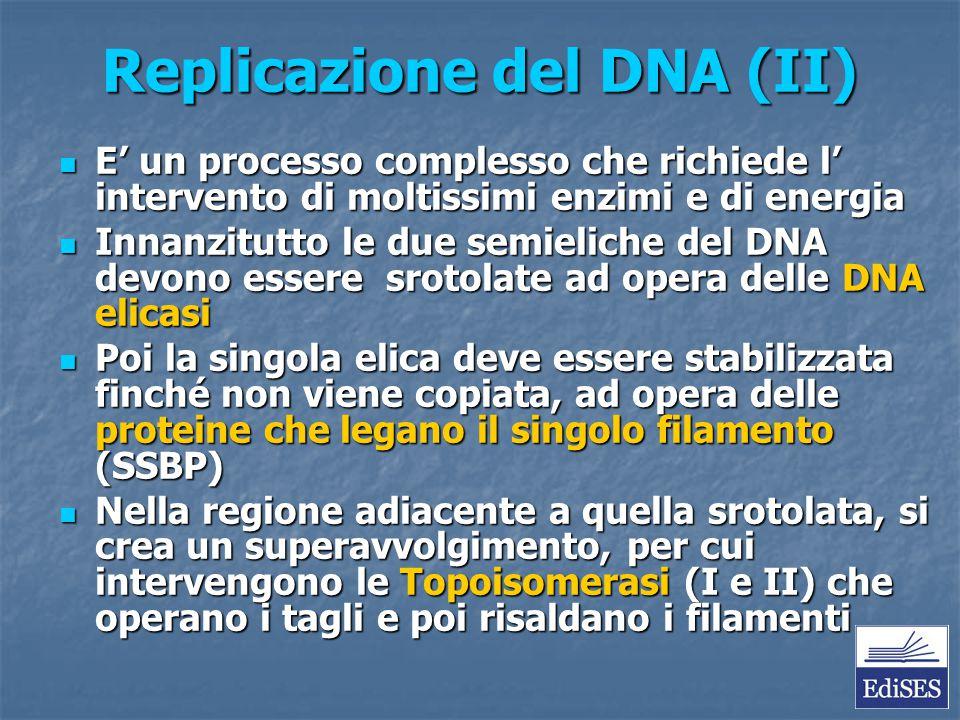 Replicazione del DNA (II)