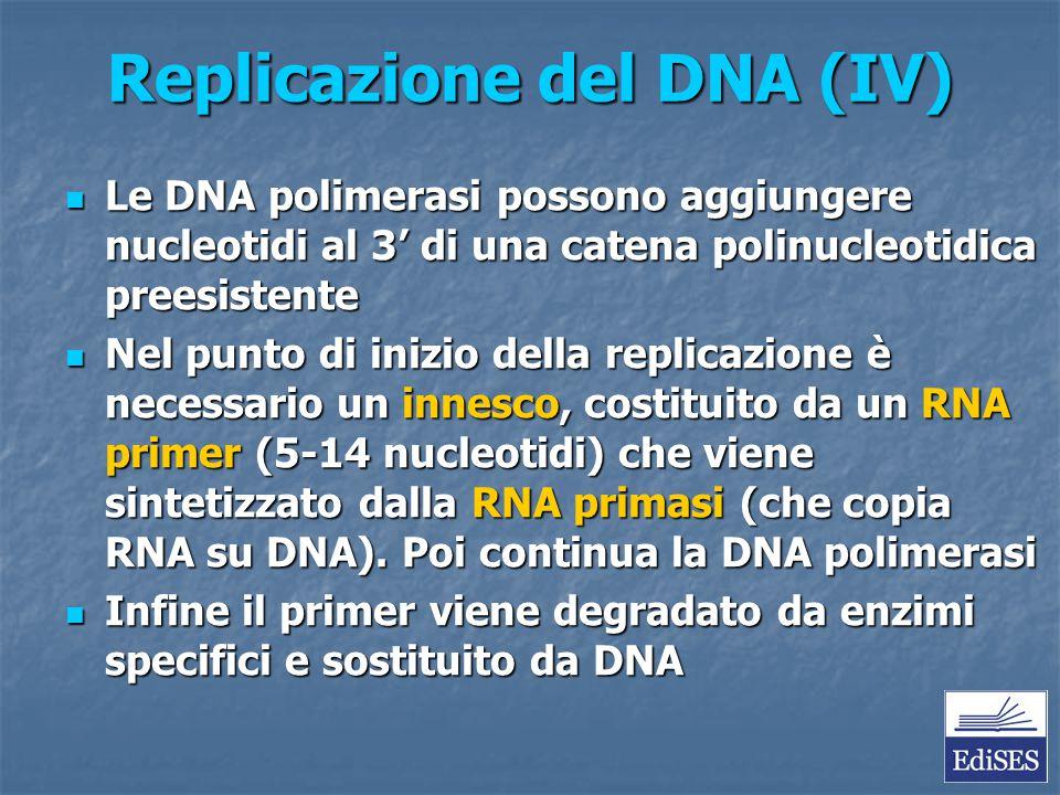 Replicazione del DNA (IV)