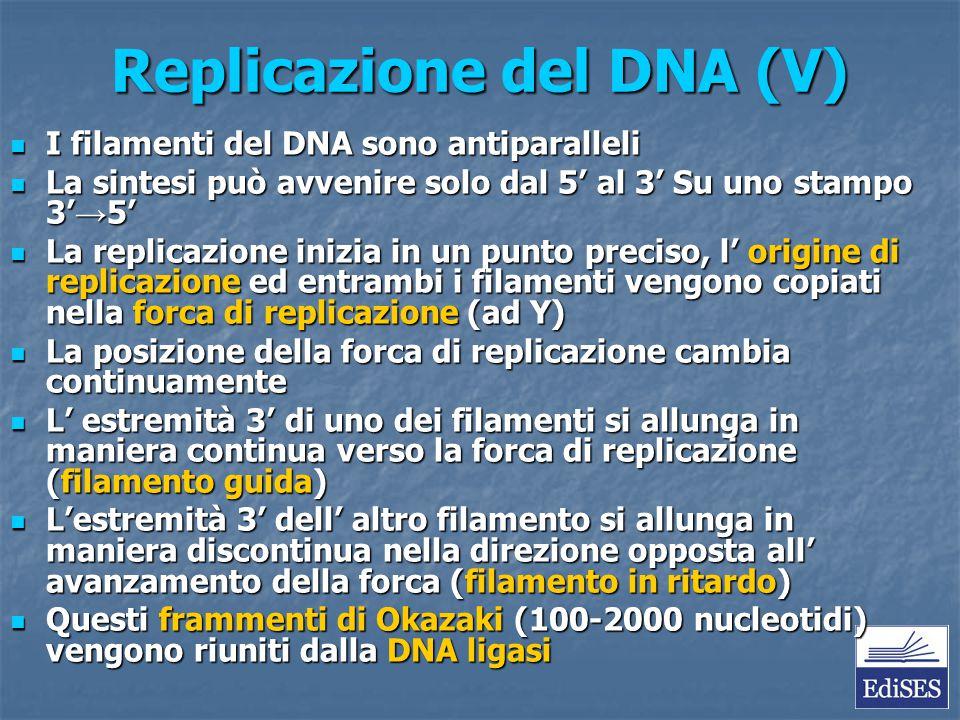 Replicazione del DNA (V)