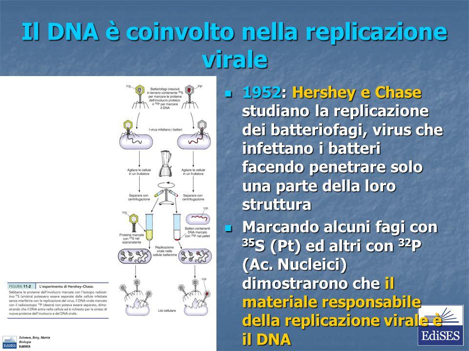 Il DNA è coinvolto nella replicazione virale