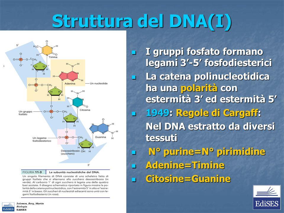 Struttura del DNA(I) I gruppi fosfato formano legami 3'-5' fosfodiesterici.