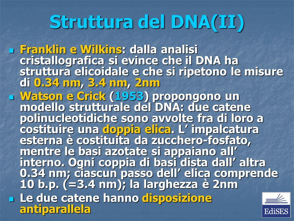 Struttura del DNA(II)