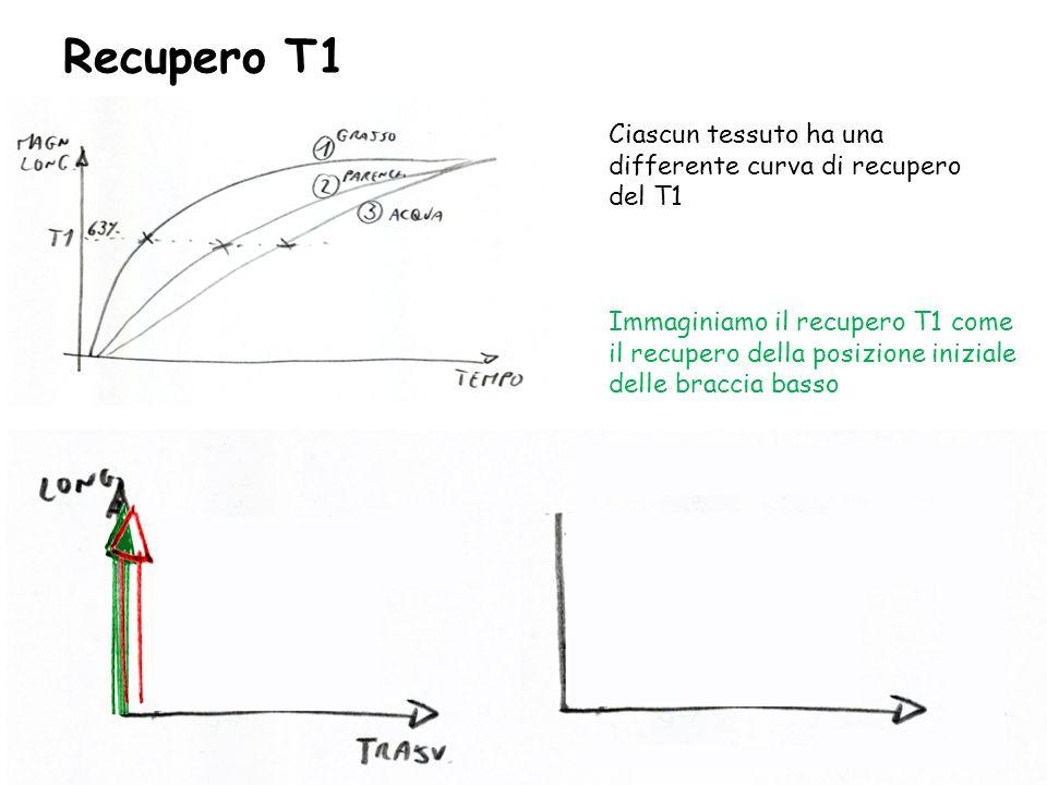 Recupero T1 Ciascun tessuto ha una differente curva di recupero del T1