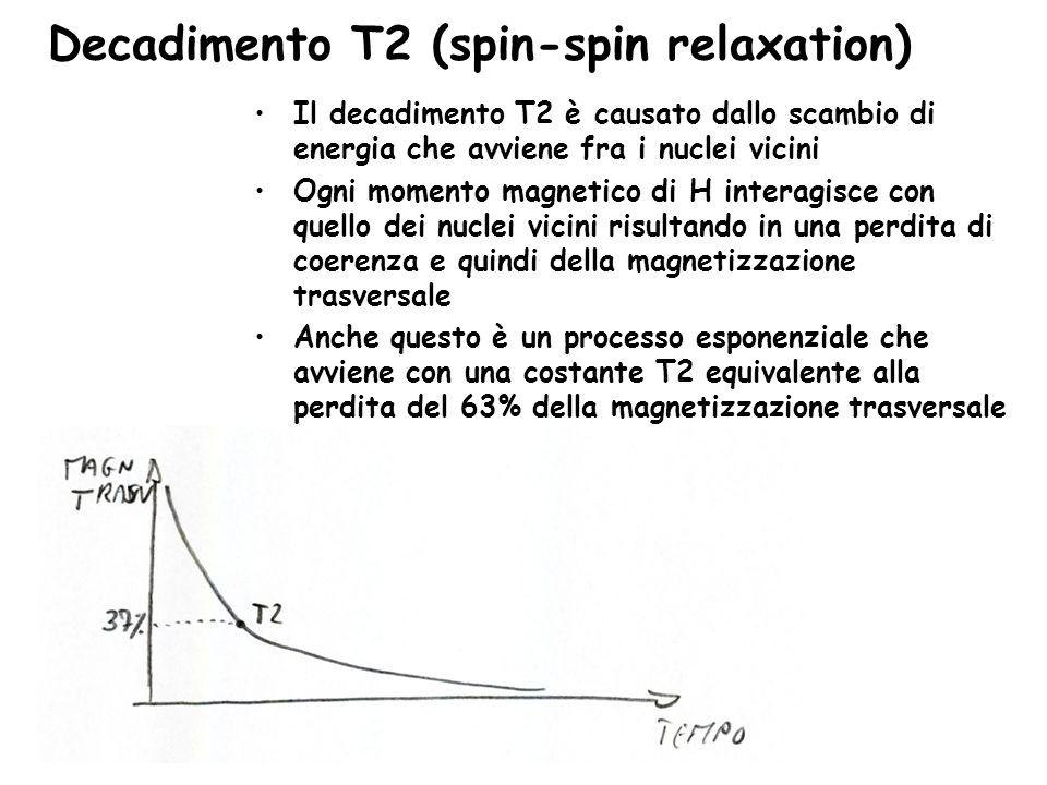 Decadimento T2 (spin-spin relaxation)