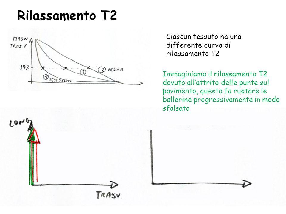 Rilassamento T2 Ciascun tessuto ha una differente curva di rilassamento T2.