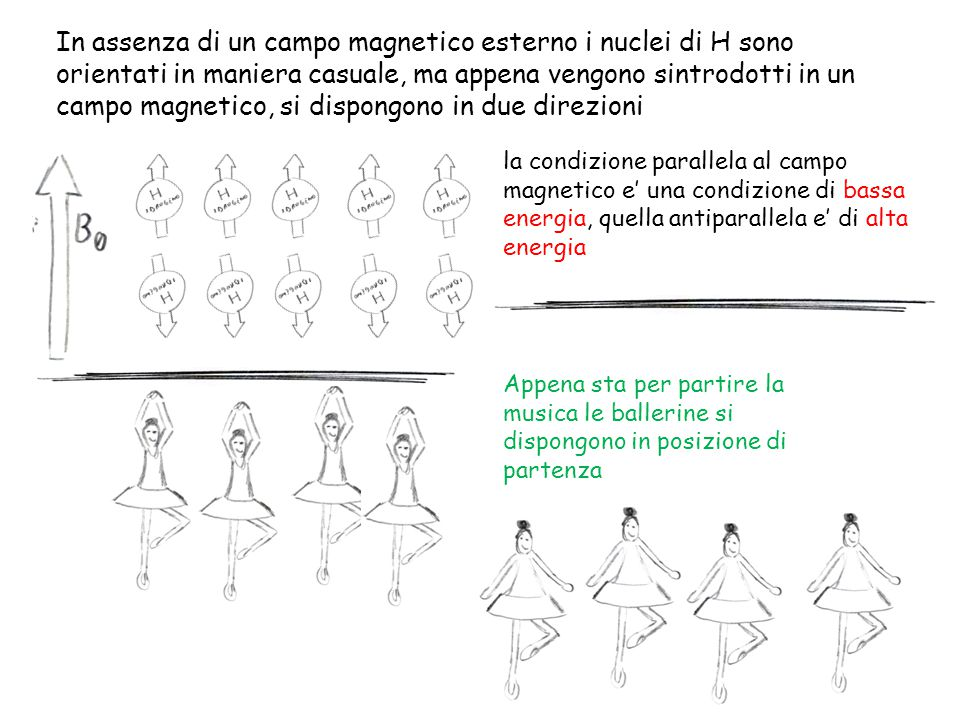 In assenza di un campo magnetico esterno i nuclei di H sono orientati in maniera casuale, ma appena vengono sintrodotti in un campo magnetico, si dispongono in due direzioni