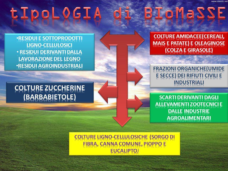 tIpoLOGIA di BIoMaSSE COLTURE ZUCCHERINE (BARBABIETOLE)