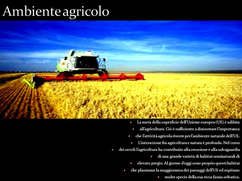 Ambiente agricolo La metà della superficie dell'Unione europea (UE) è adibita. all'agricoltura. Ciò è sufficiente a dimostrare l'importanza.