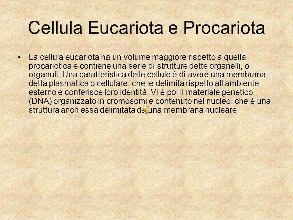 Cellula Eucariota e Procariota