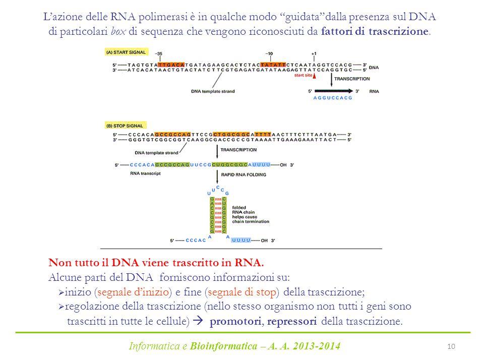 Non tutto il DNA viene trascritto in RNA.