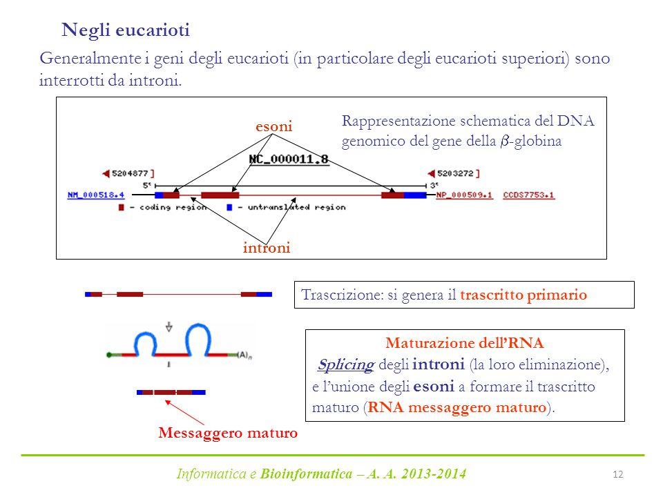 Negli eucarioti Generalmente i geni degli eucarioti (in particolare degli eucarioti superiori) sono interrotti da introni.