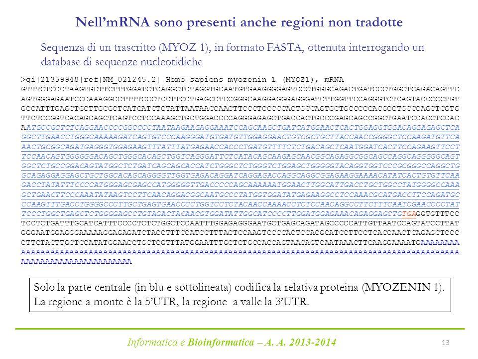 Nell'mRNA sono presenti anche regioni non tradotte