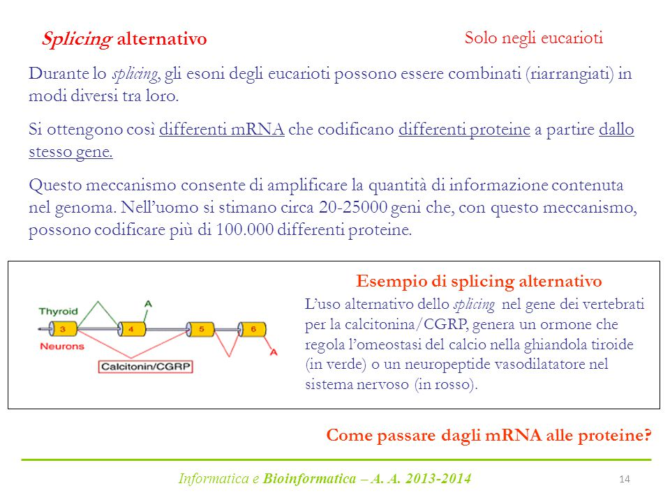 Esempio di splicing alternativo