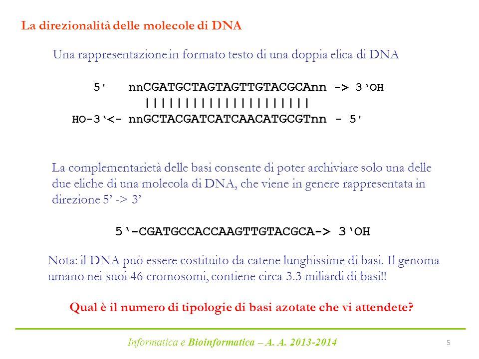 La direzionalità delle molecole di DNA