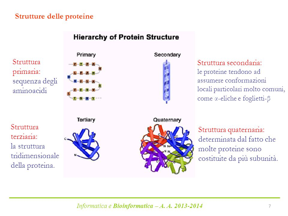 Strutture delle proteine
