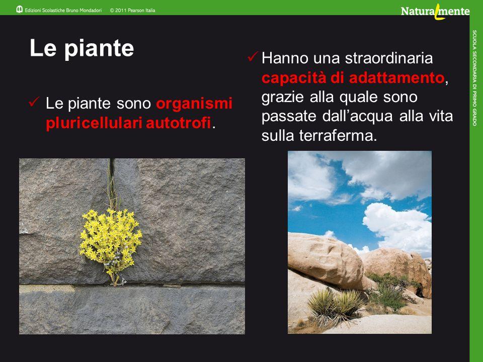 Le piante Hanno una straordinaria capacità di adattamento, grazie alla quale sono passate dall'acqua alla vita sulla terraferma.