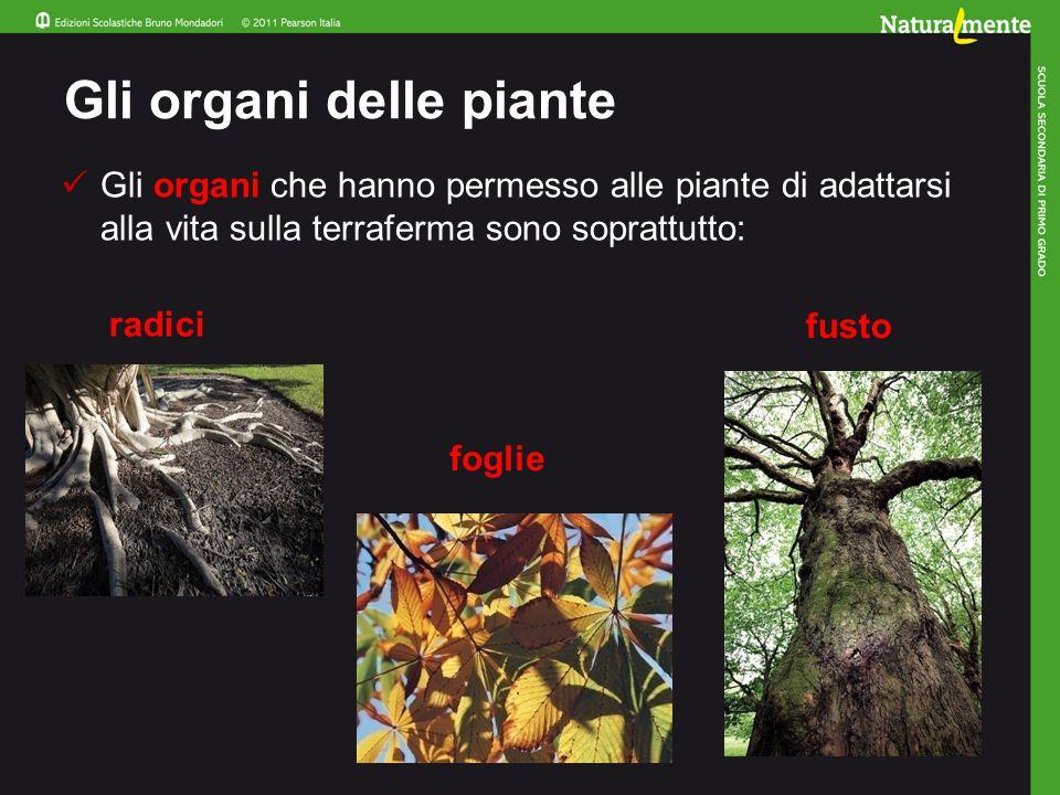 Gli organi delle piante