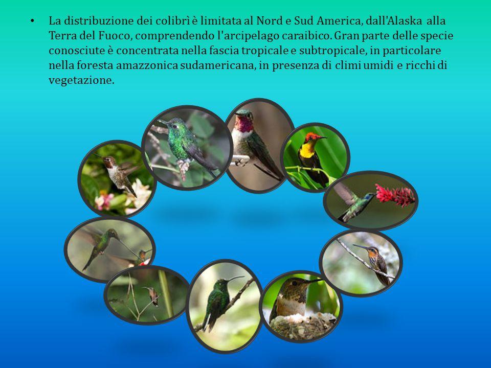 La distribuzione dei colibrì è limitata al Nord e Sud America, dall Alaska alla Terra del Fuoco, comprendendo l arcipelago caraibico.