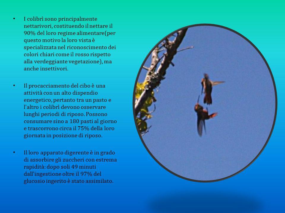 I colibrì sono principalmente nettarivori, costituendo il nettare il 90% del loro regime alimentare(per questo motivo la loro vista è specializzata nel riconoscimento dei colori chiari come il rosso rispetto alla verdeggiante vegetazione), ma anche insettivori.