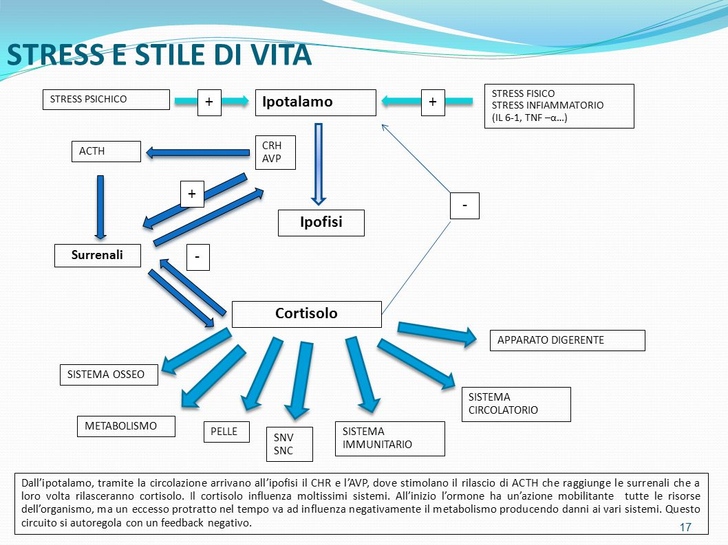 STRESS E STILE DI VITA + Ipotalamo + + - Ipofisi - Cortisolo Surrenali
