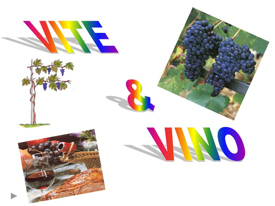 VITE & VINO