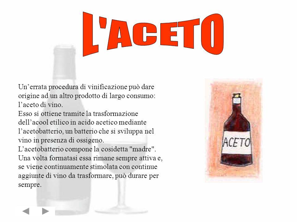 L ACETO Un'errata procedura di vinificazione può dare origine ad un altro prodotto di largo consumo: l'aceto di vino.