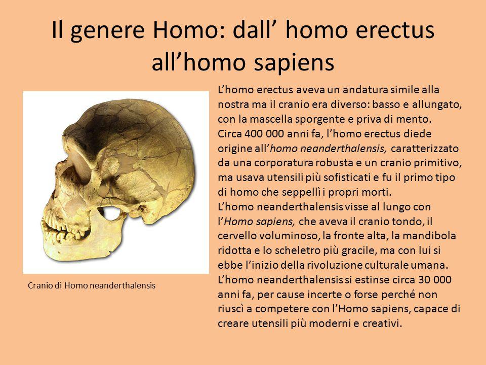 Il genere Homo: dall' homo erectus all'homo sapiens