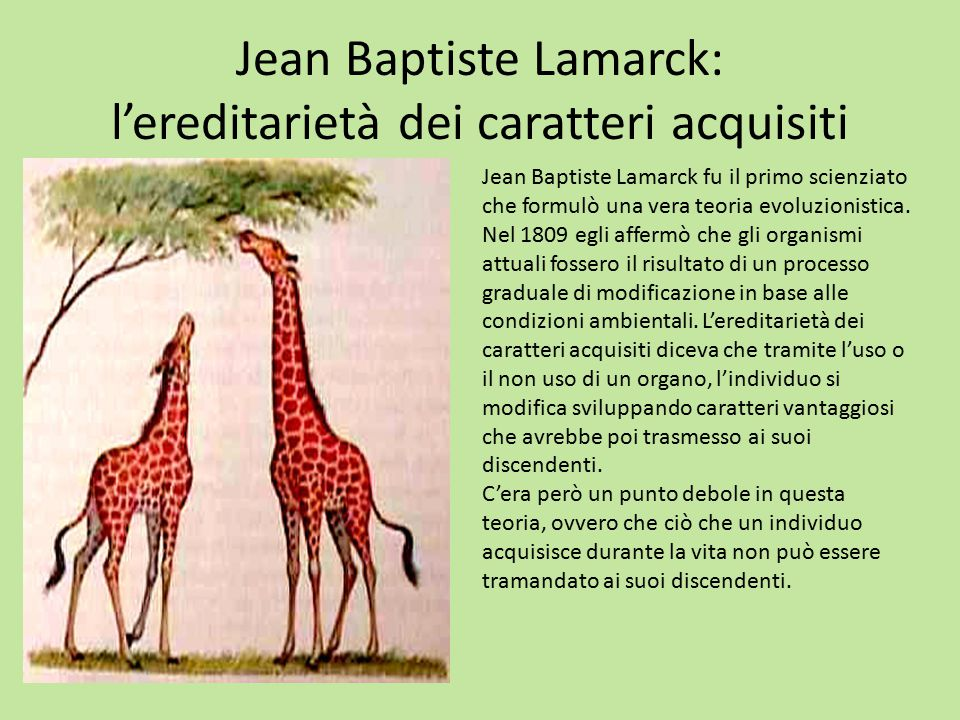 Jean Baptiste Lamarck: l'ereditarietà dei caratteri acquisiti