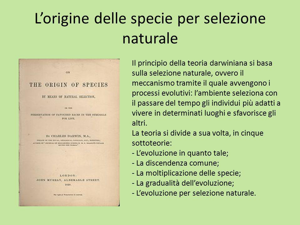 L'origine delle specie per selezione naturale