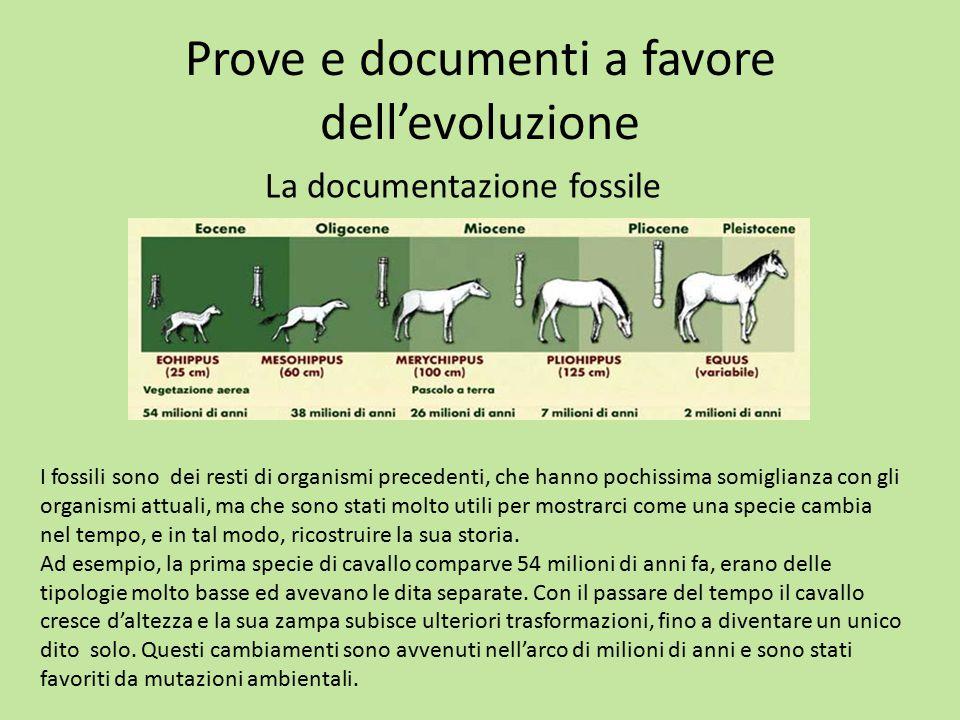 Prove e documenti a favore dell'evoluzione