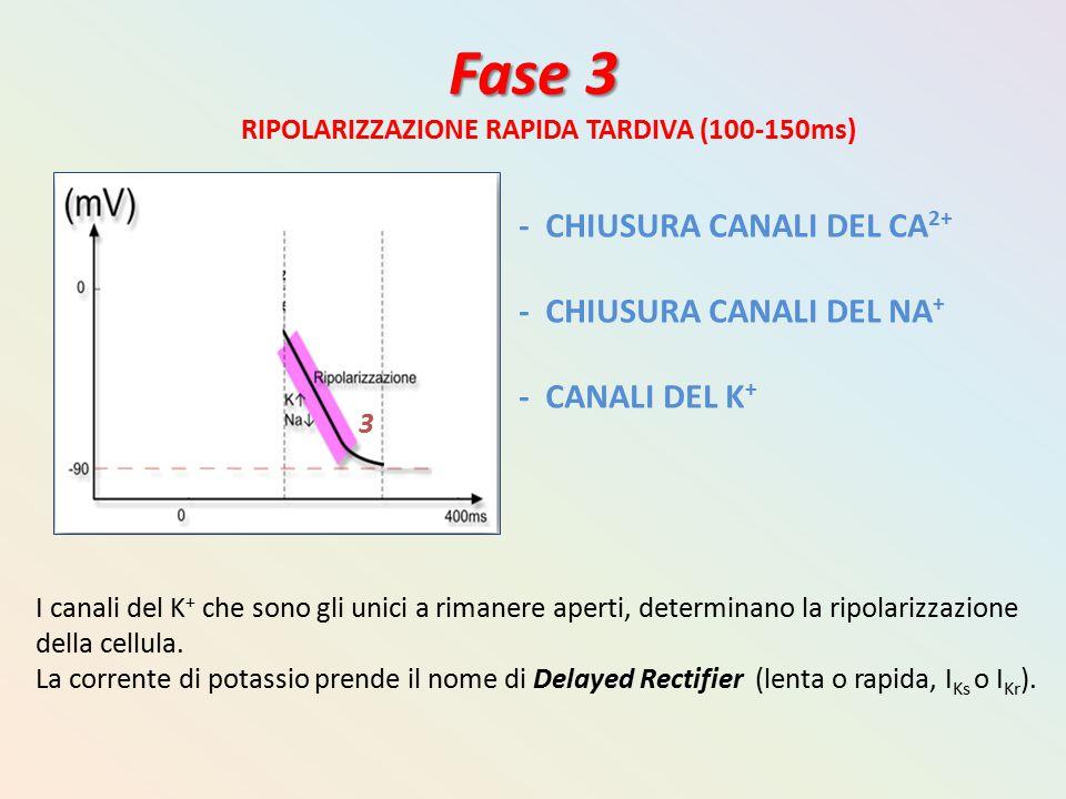 Fase 3 - CHIUSURA CANALI DEL CA2+ - CHIUSURA CANALI DEL NA+