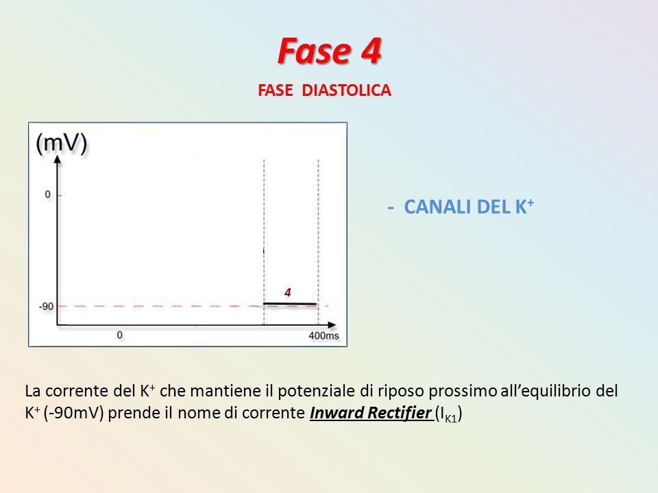 Fase 4 - CANALI DEL K+ FASE DIASTOLICA
