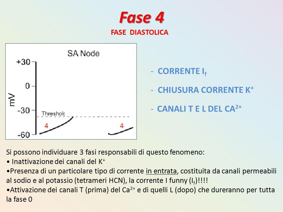 Fase 4 CORRENTE If CHIUSURA CORRENTE K+ CANALI T E L DEL CA2+