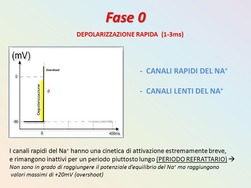 Fase 0 - CANALI RAPIDI DEL NA+ - CANALI LENTI DEL NA+