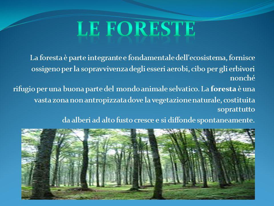 Le foreste La foresta è parte integrante e fondamentale dell ecosistema, fornisce.