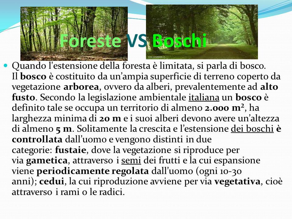 Foreste VS Boschi